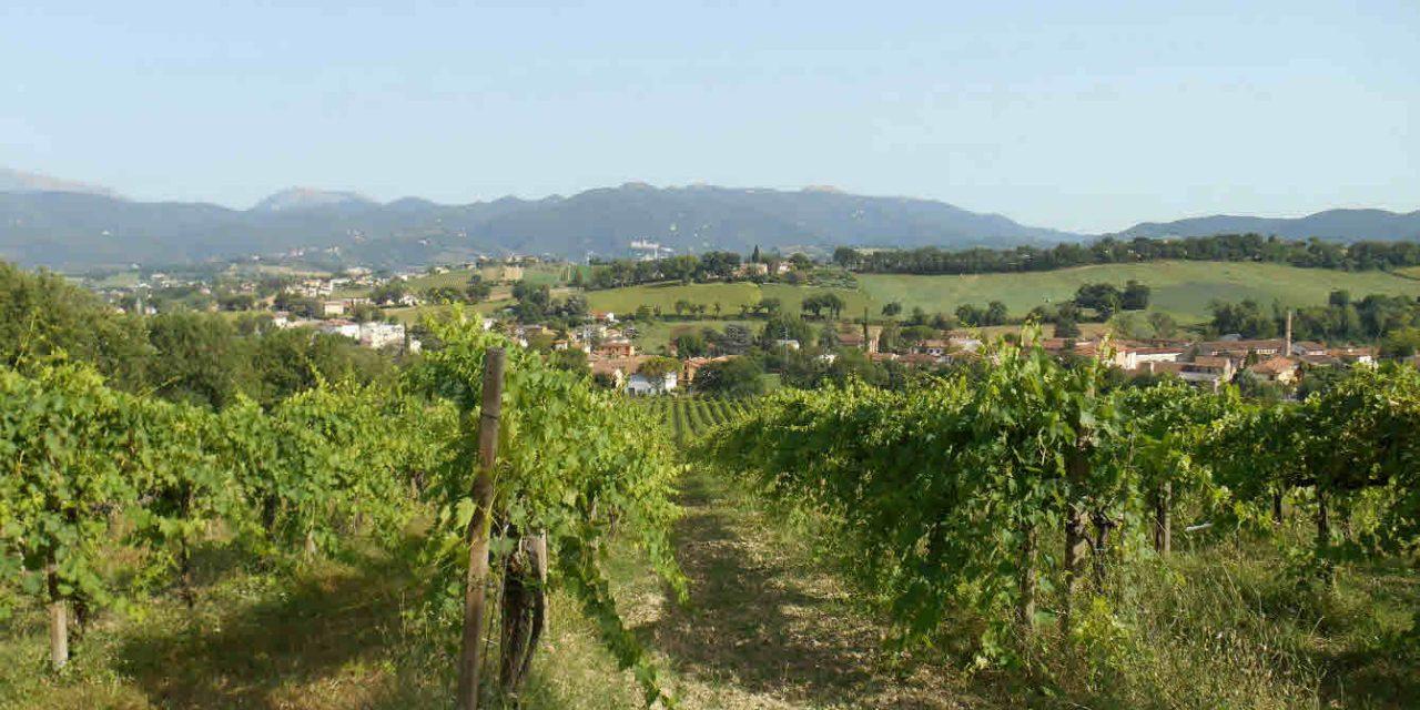 Spoleto (PG) Fr. Morgnano – appezzamenti di terreno agricolo